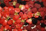 late season berry crop
